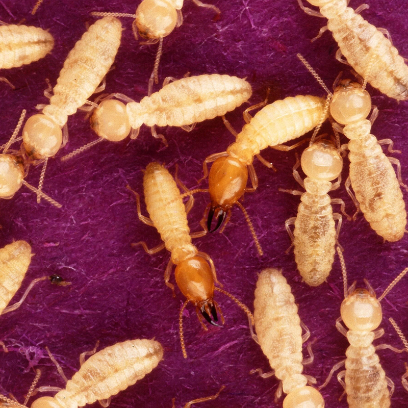 Choosing a Treatment Method After Your Termite Inspection