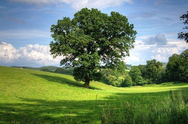 Oak Tree Pest and Disease Control