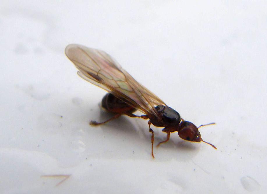 Limit Termite Food Sources