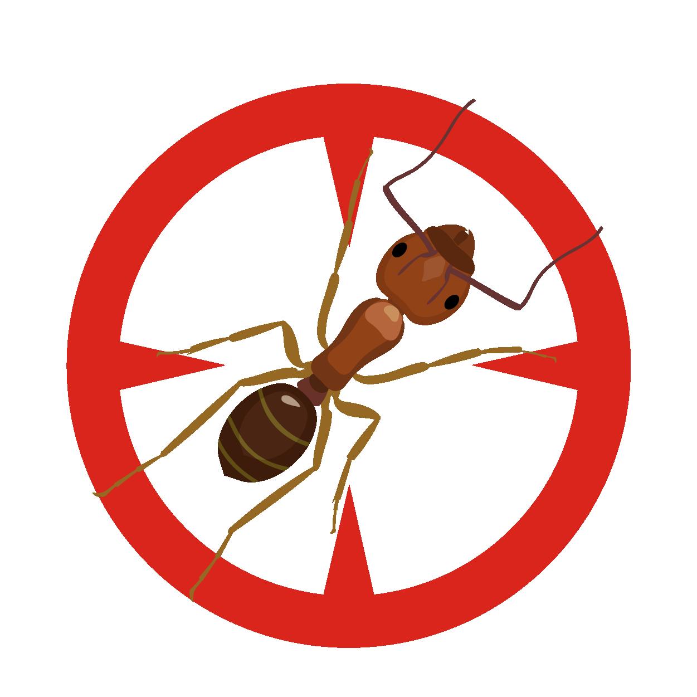 Killroy Ant Control Services