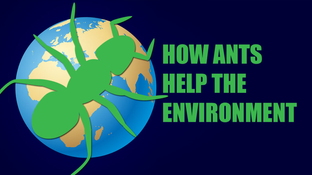 How Ants Help the Environment