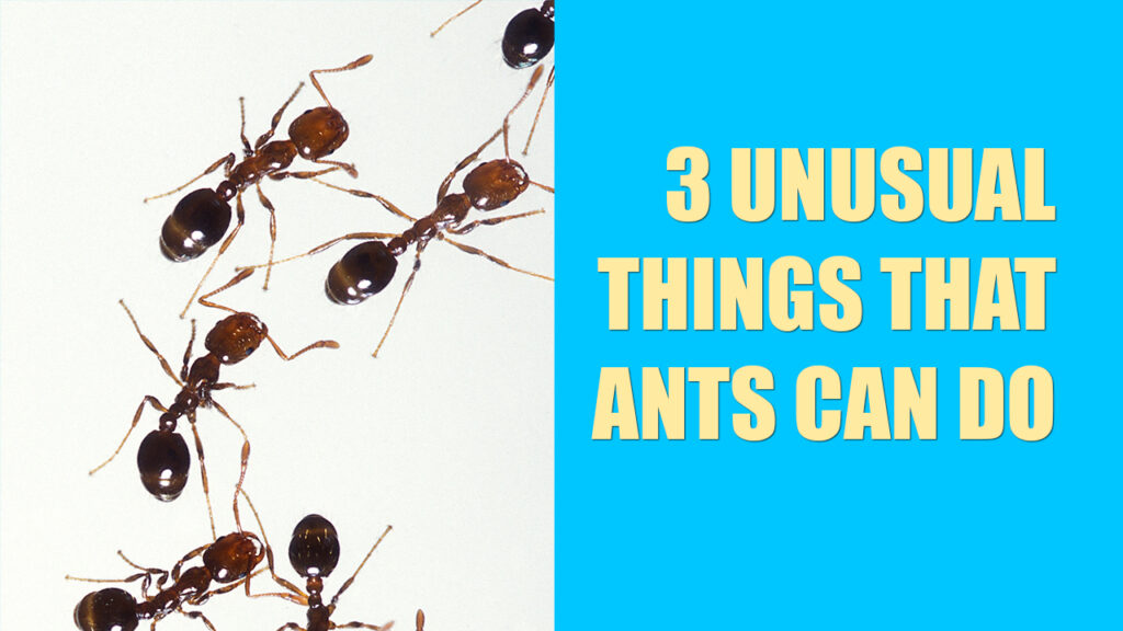 3 Unusual Things That Ants Can Do
