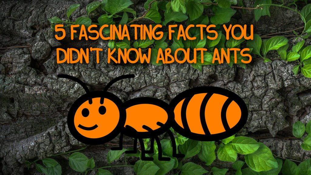 5 Fascinating Facts You Didn't Know About Ants